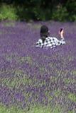 Ett fält av vibrerande lavendel arkivbild