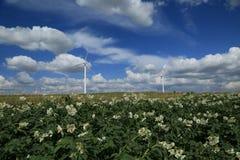 Ett fält av windturbiner Arkivbild