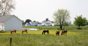 Ett fält full av betande burros. Arkivbild