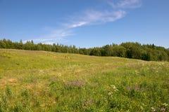 Ett fält i skogen nära den heliga Treenighet Anzersky Skete fotografering för bildbyråer