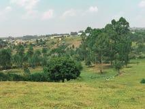 Ett fält i Uganda royaltyfri bild