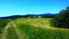 Ett fält med kärvar av hö Arkivfoto