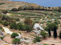 Ett fält nära havet Royaltyfri Bild