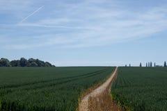 Ett fält och ett spår som leder till horisonten arkivfoto