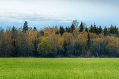 Ett fält som beströs med gräs och skoghöstlandskap royaltyfria foton
