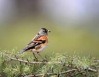 fåglar Fotografering för Bildbyråer