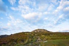 Ett får på en kulle på klipporna på Slibh Liag, Co Donegal royaltyfri fotografi