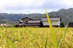Ett förorts- liv i Japan Hus bredvid ricefield Pic var tagandet Arkivfoto