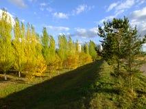 Ett falltimelandskap Arkivfoton