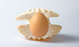 Ett fegt ägg i ett snäckskal Arkivfoton
