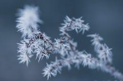 Ett fint tunt fattar dolt med frostiga bildande Arkivfoton