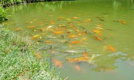Ett fiskdamm royaltyfri foto