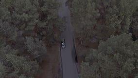 Ett flyg över ett Forest Park, sörjer träd, ett flyg över treetopsna och en väg som en svart sportbil rider längs lager videofilmer