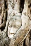 Ett forntida buddha huvud inom träd rotar Arkivfoto