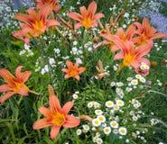 Ett foto av den härliga blommiga trädgården arkivbilder