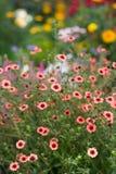 Ett foto av en blomma i trädgården royaltyfri bild