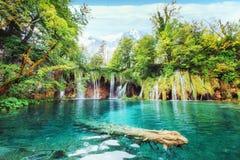 Ett foto av fiskar som simmar i en sjö som tas i den nationalparkPlitvice Kroatien Royaltyfria Bilder