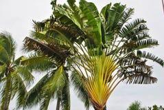 Ett foto av ett tropiskt tr?d arkivbilder