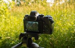 Ett foto i bilden Fotografering för Bildbyråer