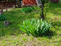 Ett fotografi av busken med stora sidor i trädgård royaltyfri bild