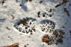 Ett fotspår i snön Royaltyfri Bild