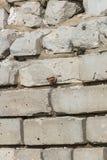 Ett fragment av en tegelstenvägg som sitter på en fjäril royaltyfri bild