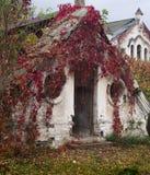 Ett gammalt övergett växthus i en höst parkerar, den Konig slotten, Ukraina royaltyfri fotografi