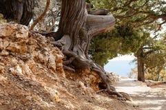 Ett gammalt träd längs slingan Royaltyfria Foton