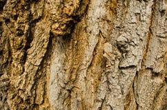 Ett gammalt trädskäll Textrure royaltyfria foton