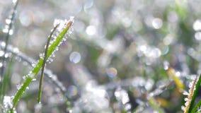 Ett gräs som täckas med frostkristallnärbild arkivfilmer