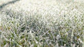 Ett gräs som täckas med frostkristallnärbild stock video