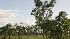 Ett gräsfält med träd arkivfilmer