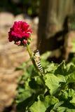 Gräshoppa och blomma Arkivfoto