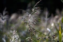 Ett grässtrå Royaltyfri Fotografi