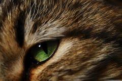 Ett grönt öga av en inhemsk katt som den lösa extrakten av detta vara är synlig i arkivfoton