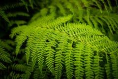 Ett grönt blad av växten Fotografering för Bildbyråer