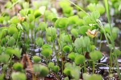 Ett grönt gräs, når att ha regnat arkivfoton
