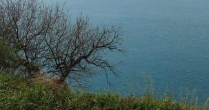 Ett grönt gräs och ett fritt träd för grafiska sidor mot en blå havsbakgrund stock video