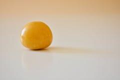 Ett guld- bär Royaltyfri Fotografi