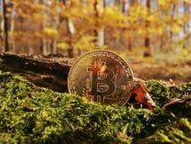 Ett guld- bitcoinmynt på bakgrunden av höstsidor och gräs royaltyfria foton