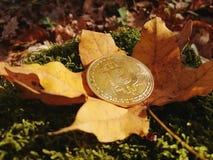 Ett guld- bitcoinmynt på bakgrunden av höstsidor och gräs arkivfoton