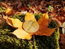 Ett guld- bitcoinmynt på bakgrunden av höstsidor och gräs royaltyfri fotografi