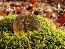 Ett guld- bitcoinmynt på bakgrunden av höstsidor och gräs arkivbild