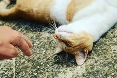 Ett gullig behövt s husdjur för gata katt royaltyfri foto