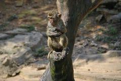Ett gulligt blöter apasammanträde på en journal Royaltyfria Bilder