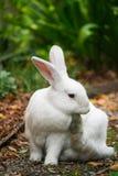 Ett gulligt vitt kaninsammanträde på en trädgårds- bana arkivbilder