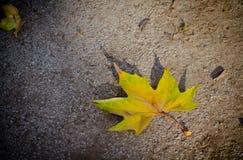 Ett gult blad för singel Arkivfoto
