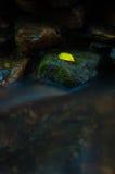 Ett gult blad på vagga med vattenfallet i mörk bottenlägetangent och lo Arkivfoto