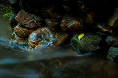 Ett gult blad på vagga med vattenfallet i mörk bottenlägetangent och lo Arkivbilder