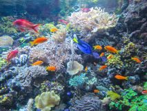 Ett härligt akvarium med den färgrika fisken, växter och koraller arkivfoton